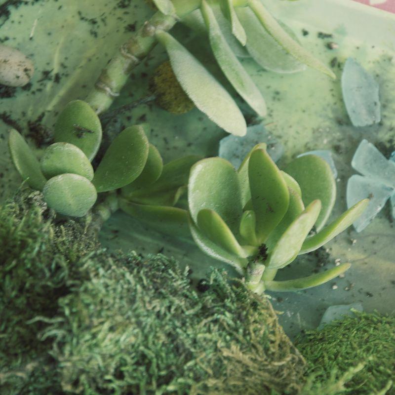 Succulent7