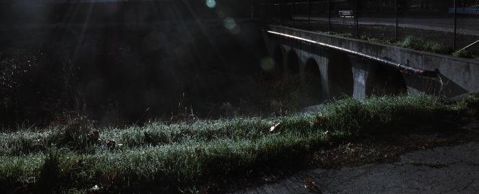 Frostweed3